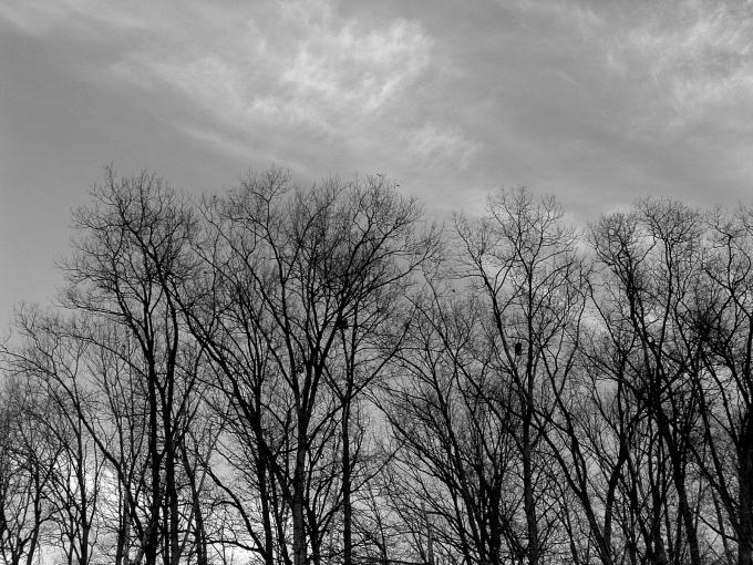 Blue_Sky_Bare_Trees-grey